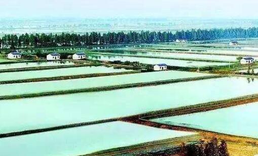四川小龙虾养殖基地比较知名的有哪些?